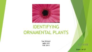 IDENTIFYING  ORNAMENTAL  PLANTS