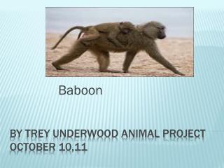 By trey Underwood Animal project    October 10,11