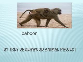 By trey Underwood Animal project