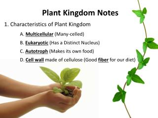 Plant Kingdom  Notes 1. Characteristics of Plant Kingdom A.  Multicellular (Many-celled)