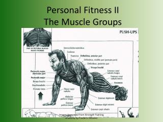 Personal Fitness II The Muscle Groups