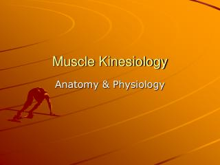 Muscle Kinesiology