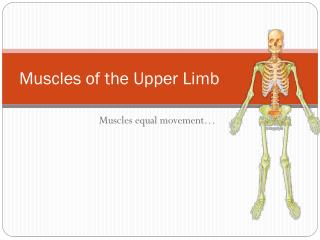 Muscles of the Upper Limb