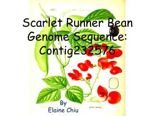 Scarlet Runner Bean Genome Sequence: Contig232576