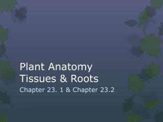 Plant Anatomy Tissues & Roots