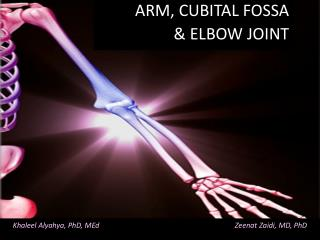 ARM, CUBITAL FOSSA  & ELBOW JOINT
