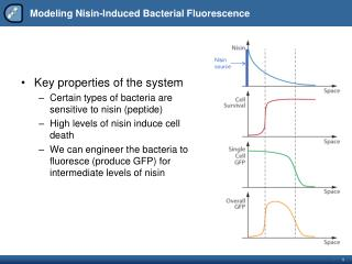 Modeling  Nisin -Induced Bacterial Fluorescence