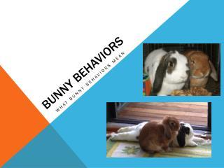 bUnny  behaviors