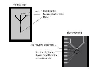 Fluidics  chip