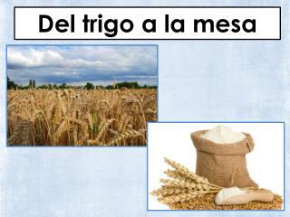 Del trigo a la mesa
