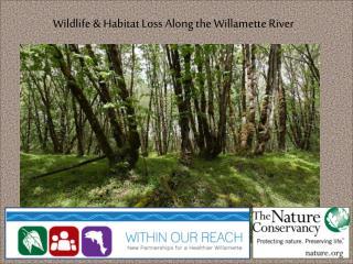 Wildlife & Habitat Loss Along the Willamette River