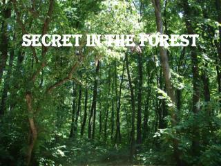 Secret in the Forest
