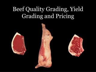 Beef Quality Grading, Yield Grading and Pricing