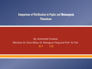 Comparison of Nitrification in Poplar and  Metasequoia Plantations