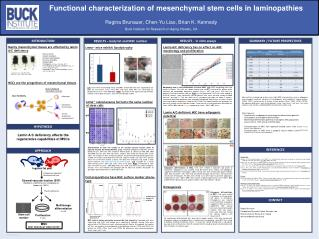 Functional characterization of  mesenchymal  stem cells in  laminopathies