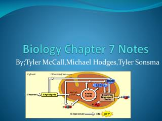 Biology Chapter 7 Notes