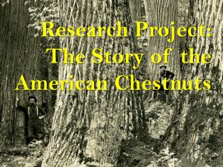 Research Project: The Story of the American Chestnuts
