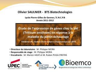 Directeur du laboratoire  : M. Philippe MORA  Responsable de stage  : M. Philippe MORA