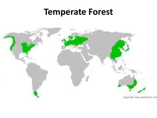 Temperate Forest