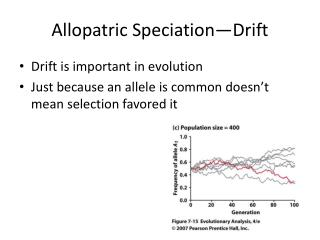 Allopatric  Speciation—Drift