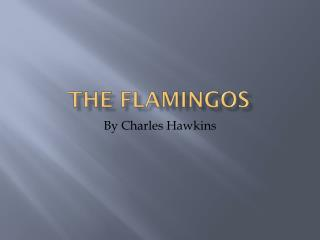 The Flamingos