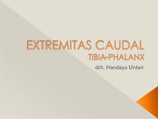 EXTREMITAS CAUDAL TIBIA-PHALANX