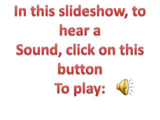 In this slideshow, to hear a  Sound, click on this button To play: