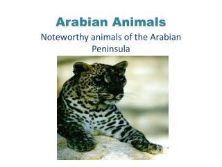 Arabian Animals
