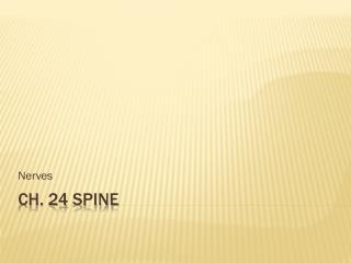 Ch. 24 Spine