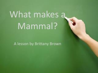 What makes a Mammal?