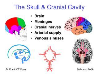 The Skull & Cranial Cavity