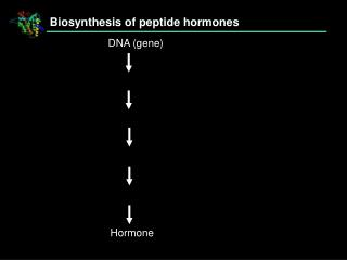 Biosynthesis of peptide hormones