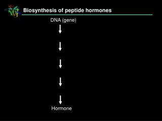 Biosynthesis of peptide hormones
