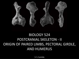BIOLOGY 524 POSTCRANIAL SKELETON -  II ORIGIN OF PAIRED LIMBS, PECTORAL GIRDLE,  AND  HUMERUS
