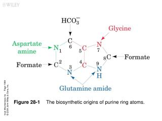Figure 28-1 The biosynthetic origins of purine ring atoms.