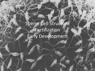 Sperm Cell Structure Fertilization Early Development