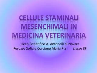 CELLULE STAMINALI MESENCHIMALI IN MEDICINA VETERINARIA