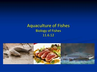 Aquaculture of Fishes Biology of Fishes 11.6.12