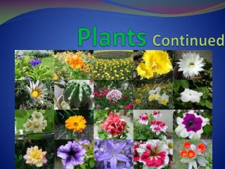 Plants Continued