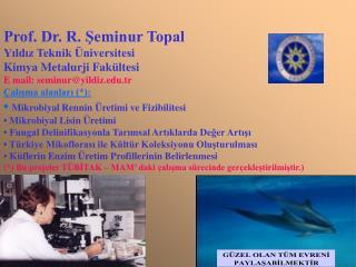 Prof. Dr. R. Seminur Topal Yildiz