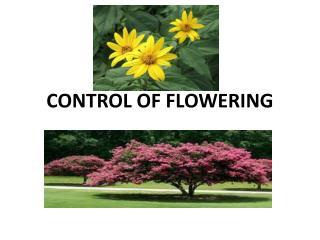 CONTROL OF FLOWERING
