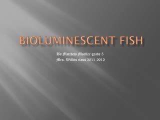 Bioluminescent fish