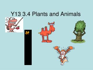 Y13 3.4 Plants and Animals
