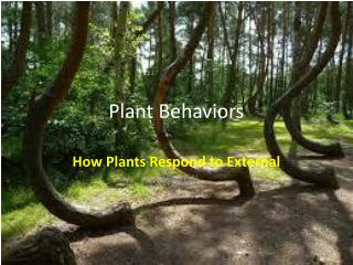Plant Behaviors
