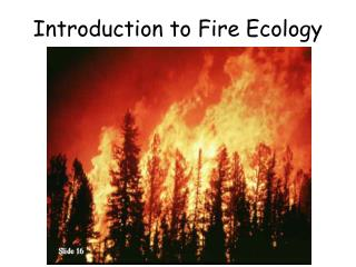 Introduction to Fire Ecology