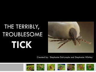 The Terribly,           troublesome Tick
