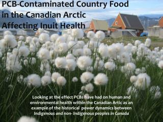 PCB-Contaminated  Country Food  in  the Canadian  Arctic  Affecting Inuit Health