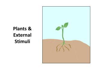 Plants & External Stimuli
