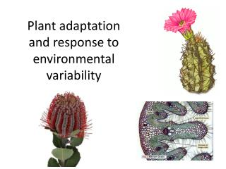 Plant adaptation and response to  environmental  variability