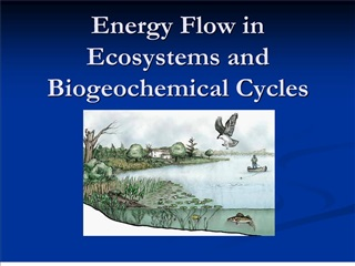 Energy Flow in Ecosystems and Biogeochemical Cycles